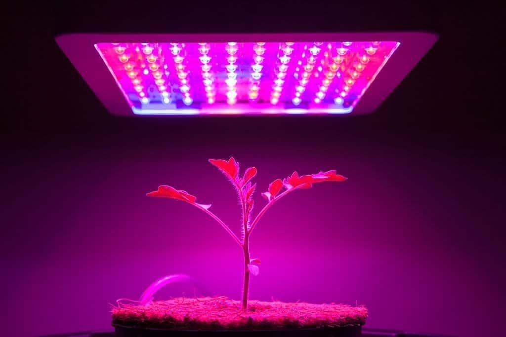 image of grow light