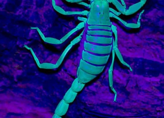 detecting scorpion