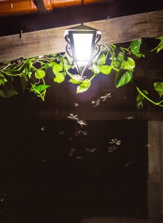 Outdoor lamp light